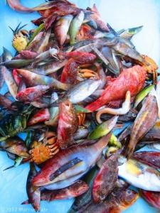 poissons_de_rocher